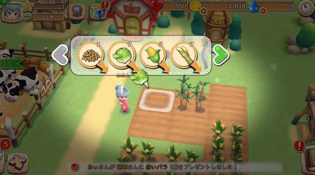 レタスやトウモロコシを栽培